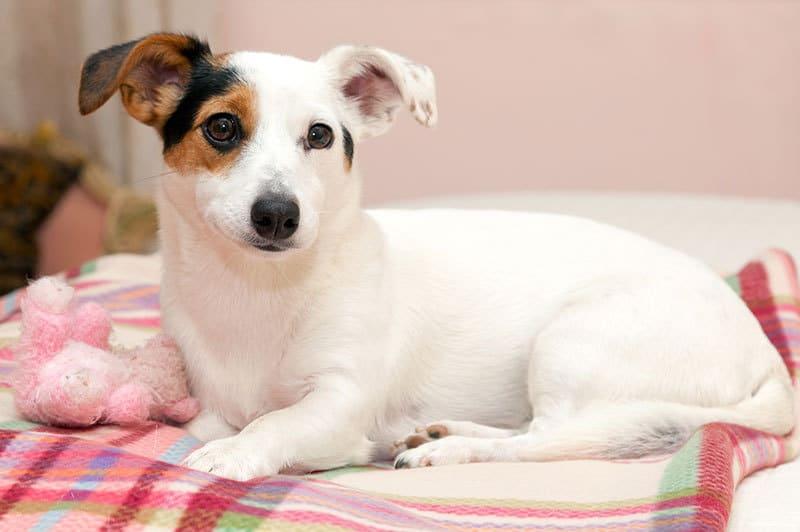 Cani di piccola taglia le abitudini e le giuste cure for Marsupio per cani di piccola taglia