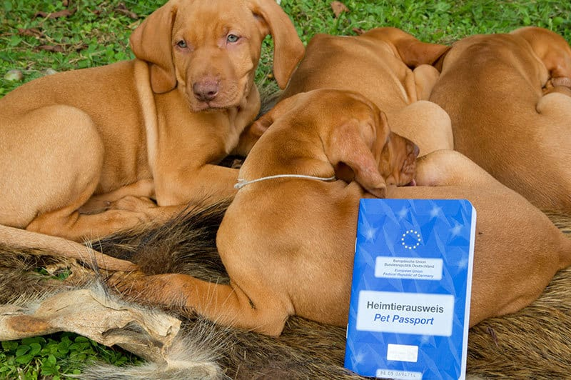 codice diritto per animali