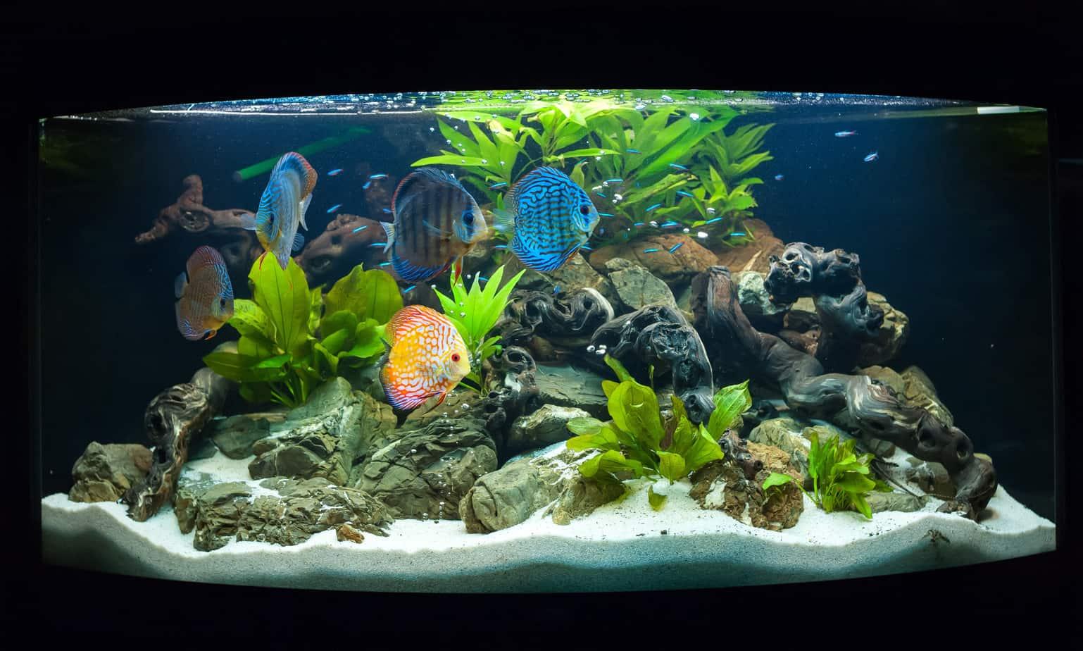 decorazioni acquario pesci