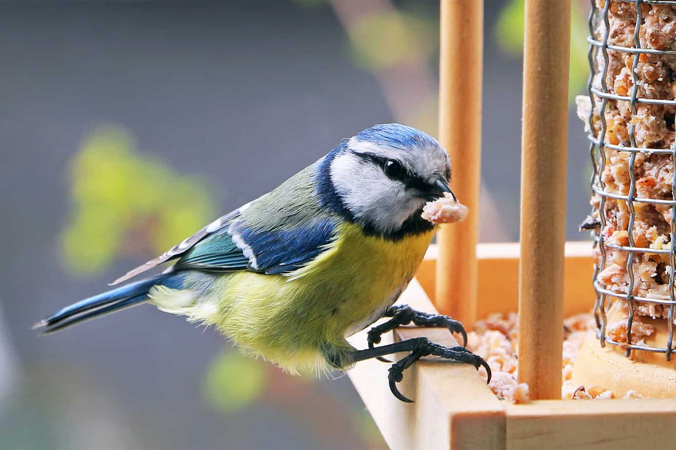 Alimentazione uccelli