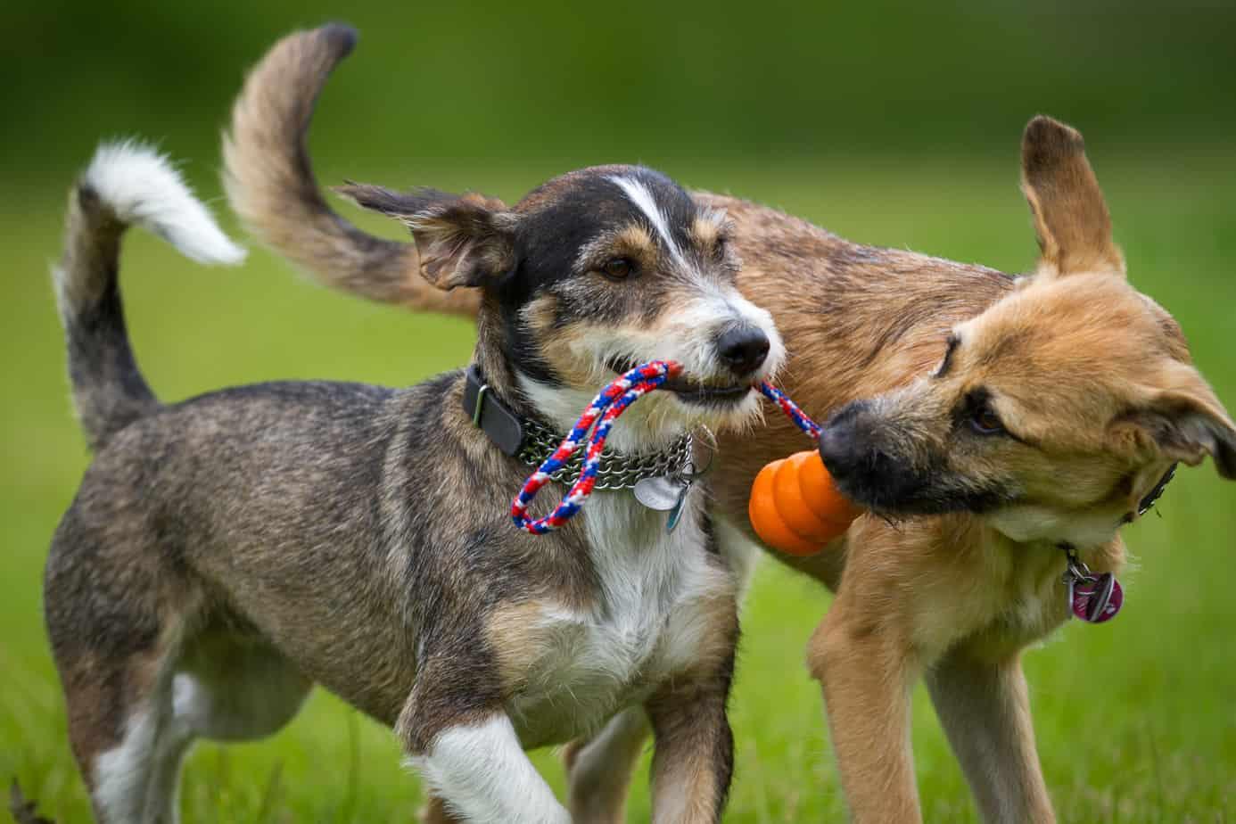 Giochi per cani