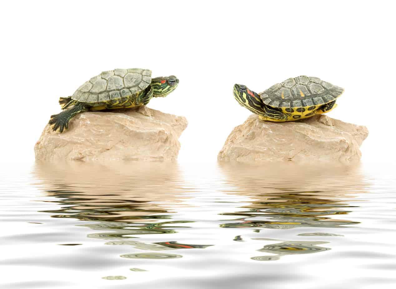 """Animali """"domestici"""" silenziosi e riservati: le tartarughe d'acqua!"""