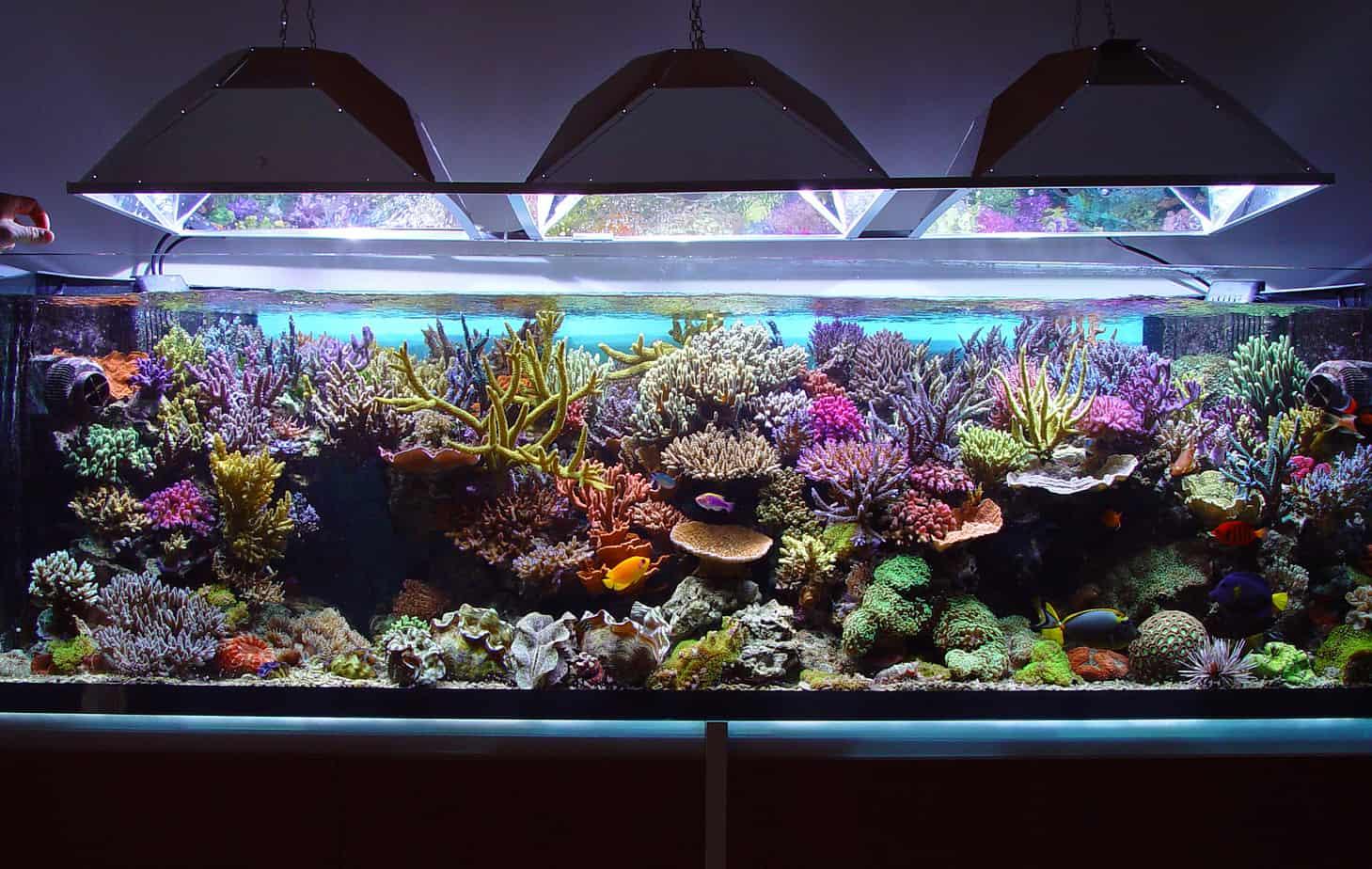 accessori acquario pesci