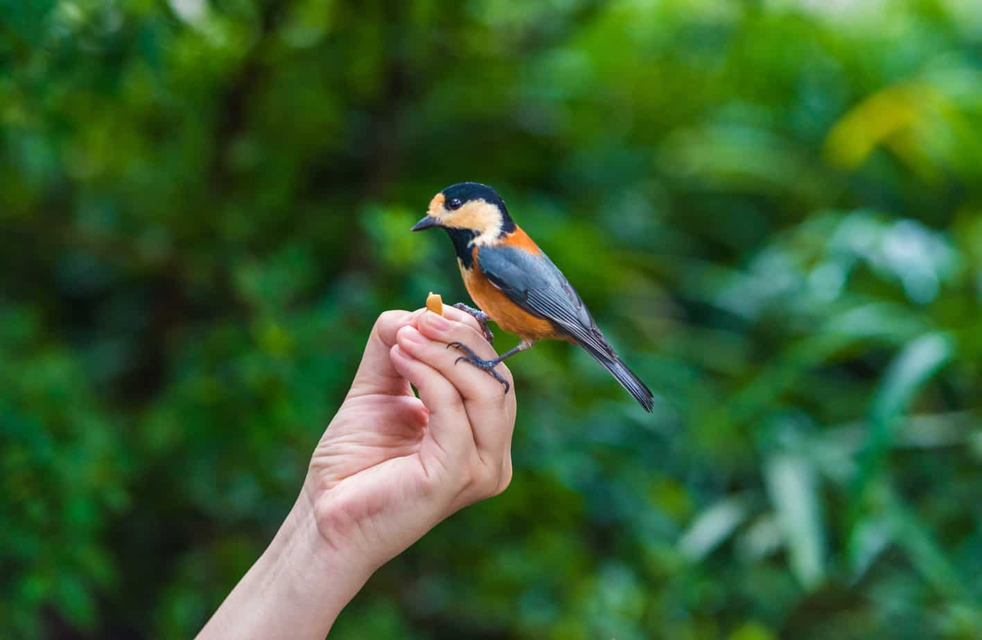 dare da mangiare agli uccelli selvatici e domestici