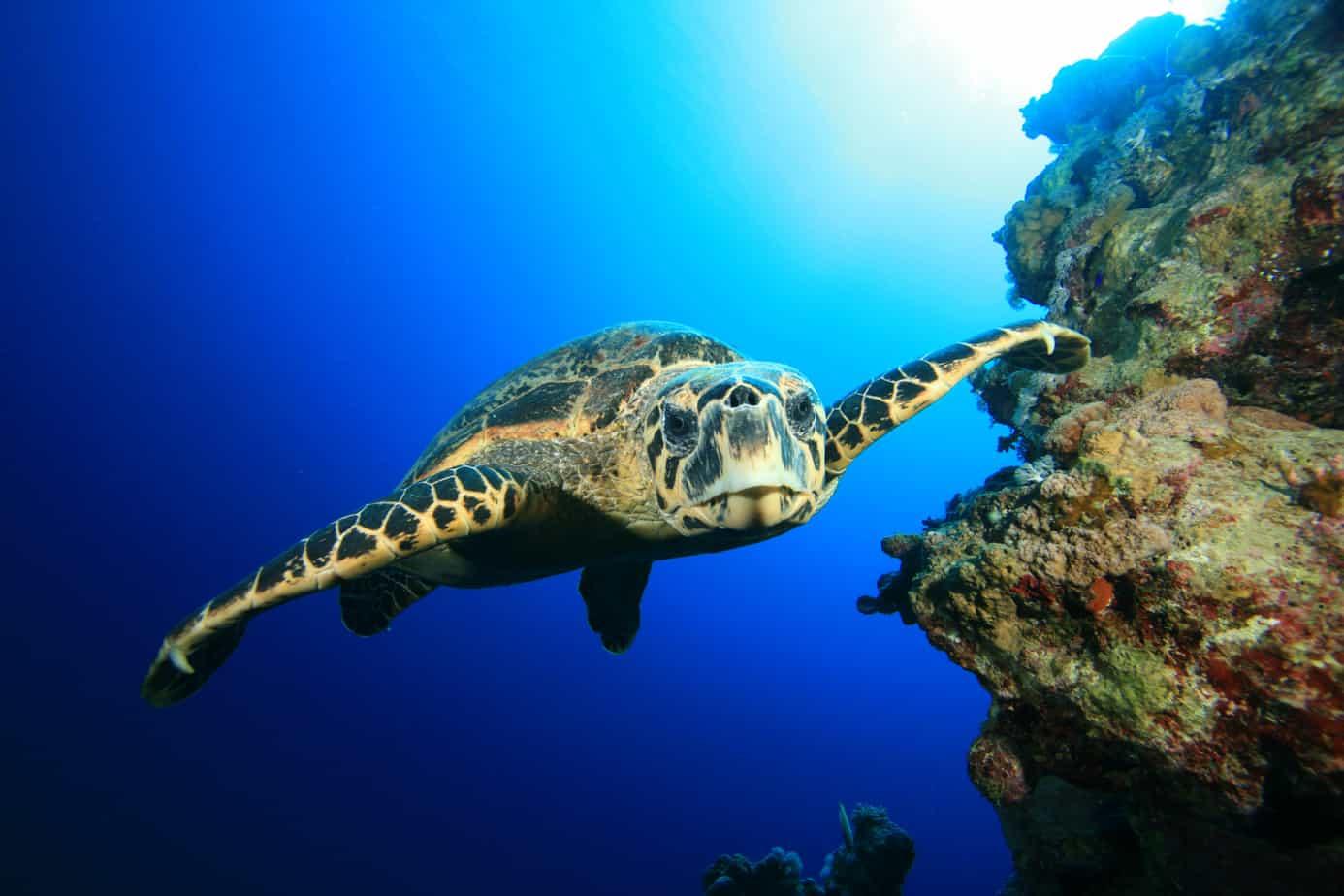 Come garantire una vita sana alla tua tartaruga? Inizia dalla corretta temperatura dell'acquario