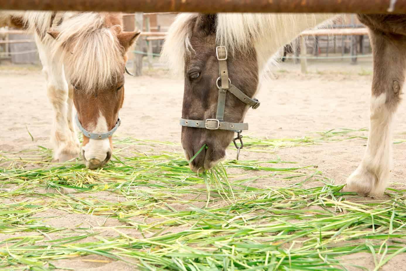 Come curare l'alimentazione del cavallo