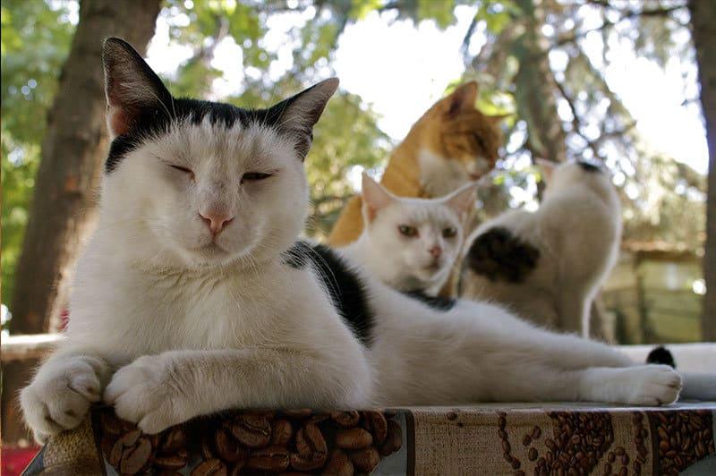 oasi felina