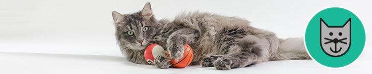 Giochi per i gatti: quali sono i più adatti e perché?