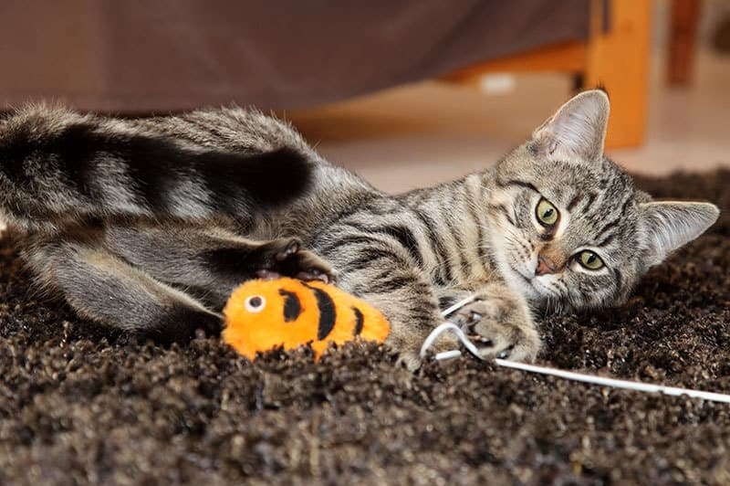 giochi per gatti