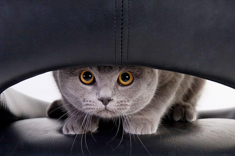 giochi per gatti: diverse modalità