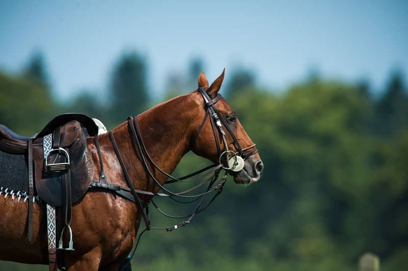accessori per cavalli: le selle