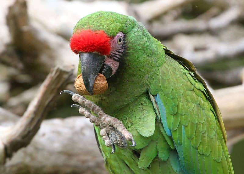 cibi per pappagalli