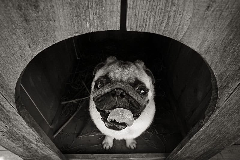 Scegliere la giusta cuccia da esterno per cani
