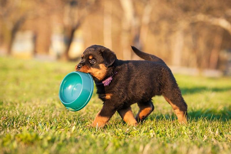 Cani cuccioli, alimentazione, svezzamento e allattamento