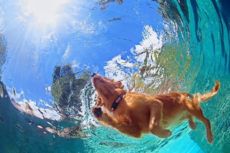 Cani e caldo: rimedi contro il colpo di calore