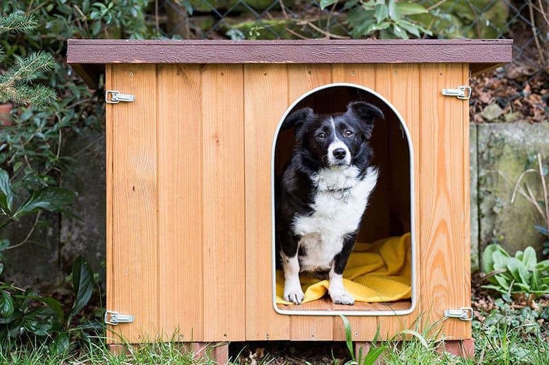 Grandezza cuccia cane esterno