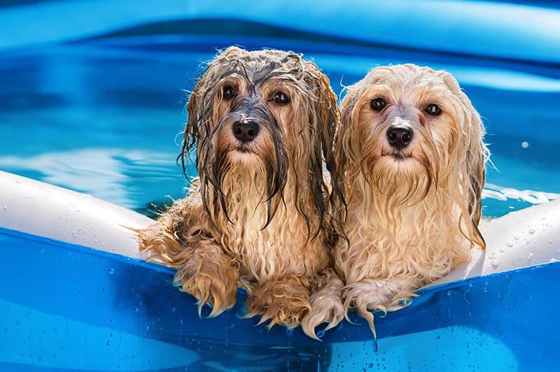 Estate: come fare per prevenire il colpo di calore ai cani